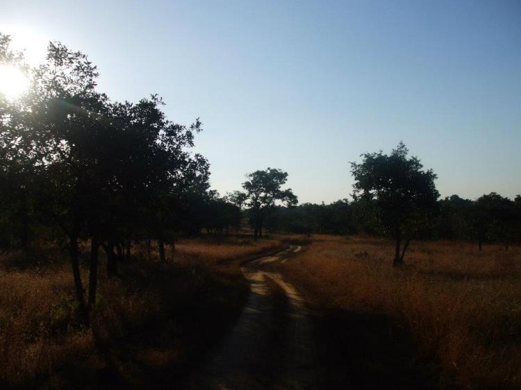 Kanha National Park, home of the Jungle Book, Madhya Pradesh