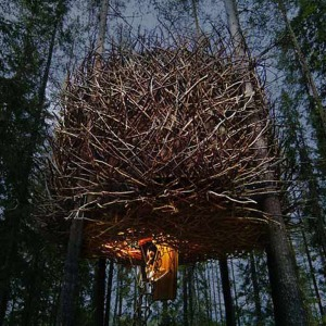 Birds-Nest-Tree-Hotel-55