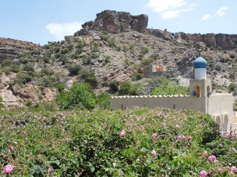 Mosque and  roses, Al Ain. The flowers are harvested each spring to create renowned rose water
